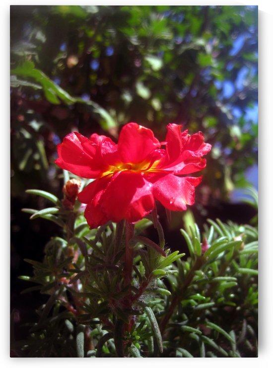 Red Summer Flower 3 by Jaeda DeWalt