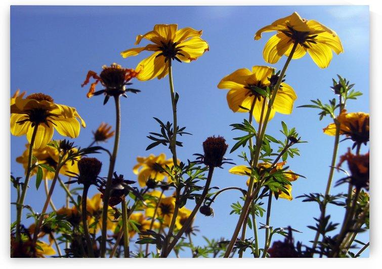 Summer Sky Flowers 1 by Jaeda DeWalt