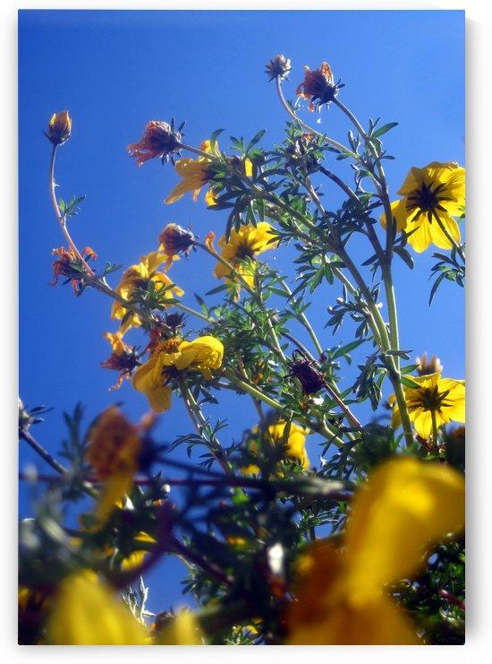 Summer Sky Flowers 6 by Jaeda DeWalt