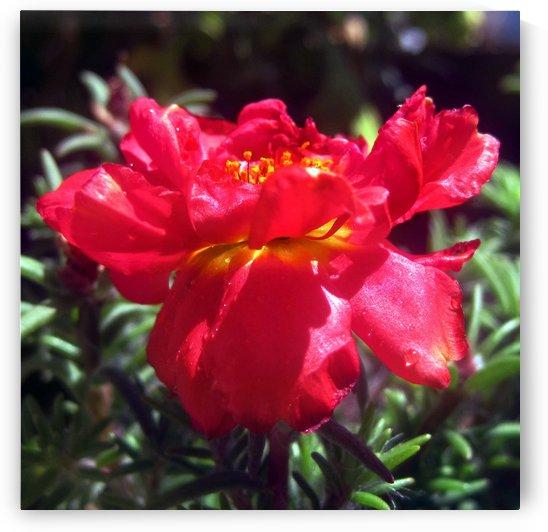 Red Summer flower 2 2 by Jaeda DeWalt