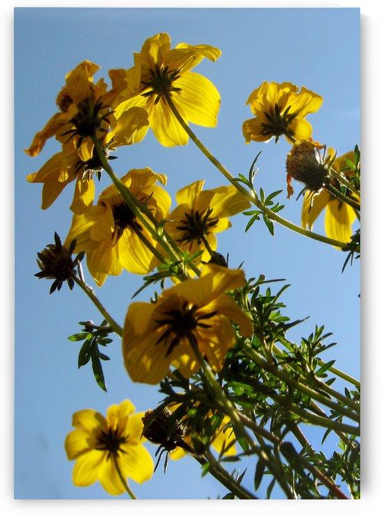 Summer Sky Flowers 4 by Jaeda DeWalt