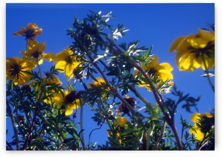 Summer Sky Garden 1 by Jaeda DeWalt