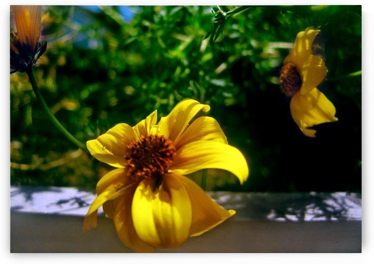 Summer Balcony Flowers 1 by Jaeda DeWalt