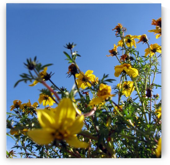 Summer Sky Garden 3 by Jaeda DeWalt