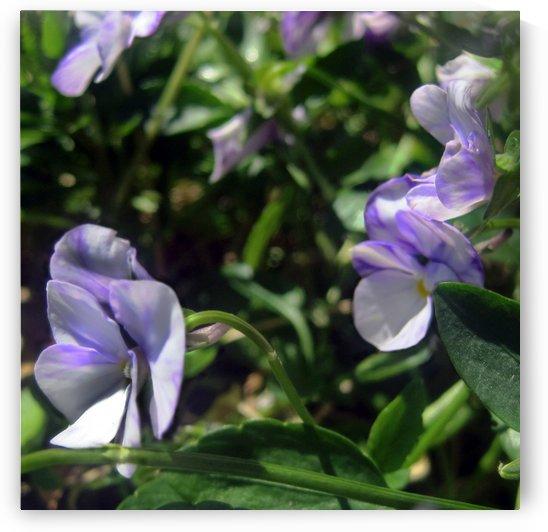 Flowers from Balcony Garden by Jaeda DeWalt