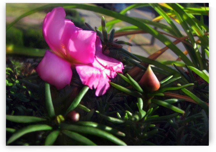 Pink Summer Flower 2 by Jaeda DeWalt