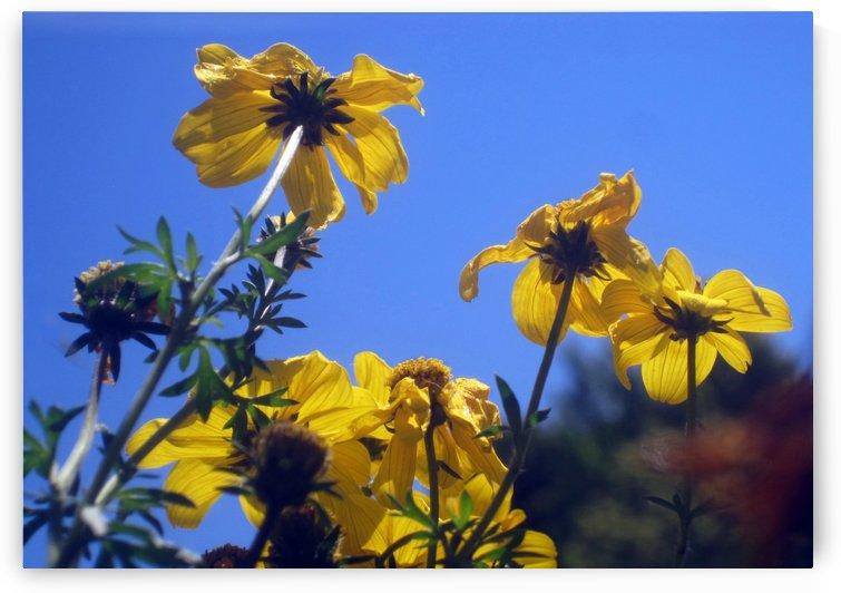 Summer Sky Flowers 3 by Jaeda DeWalt
