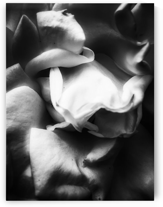 rose texture abstract background in black and white by TimmyLA