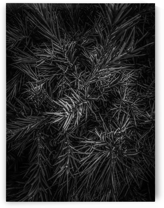 spiky plant texture abstract in black and white by TimmyLA
