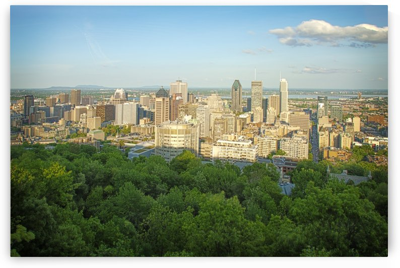 Montreal cityscape during summer season by Atelier Knox