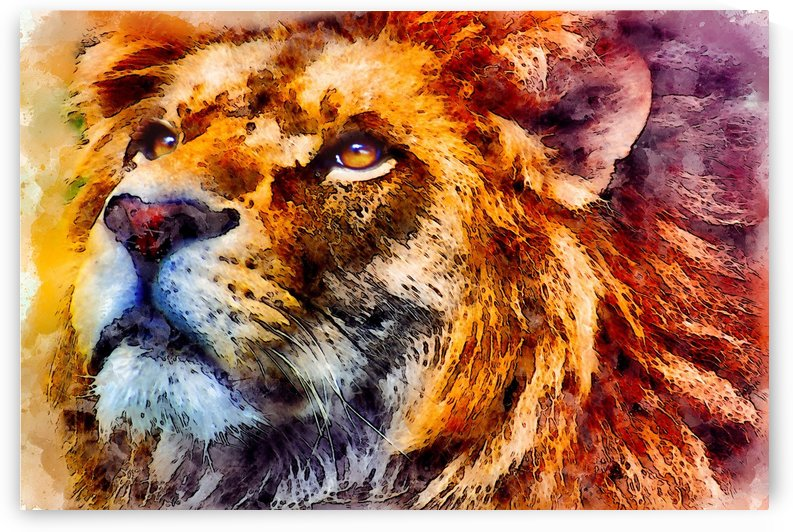 lion wild portrait look watercolor by Shamudy