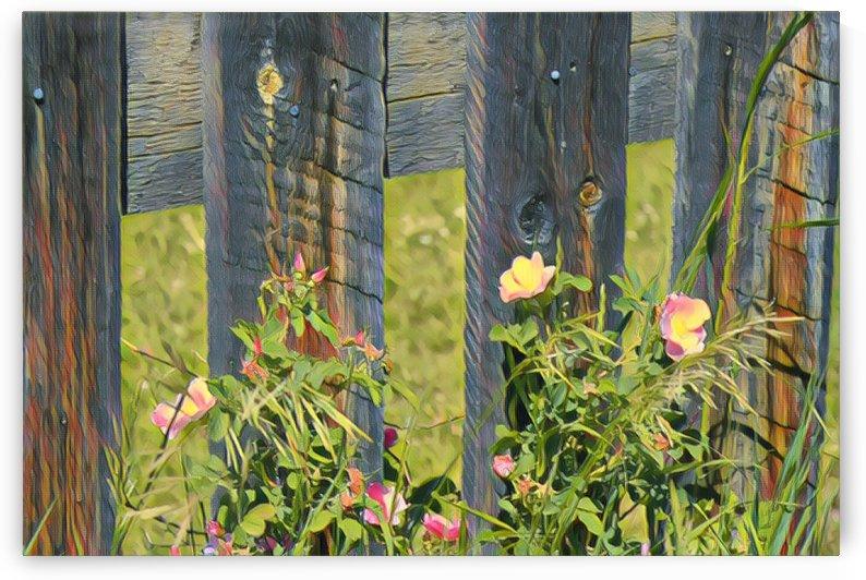 Fence post beauty by Sherry Reynard