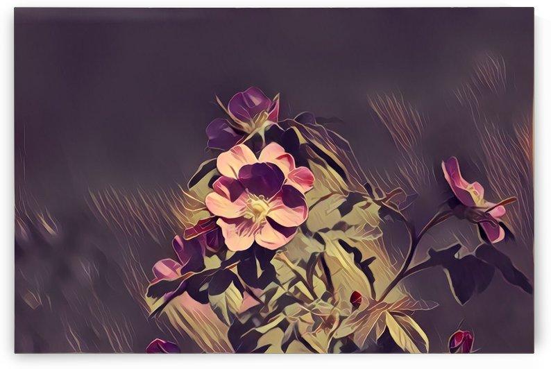 Wild roses by Sherry Reynard