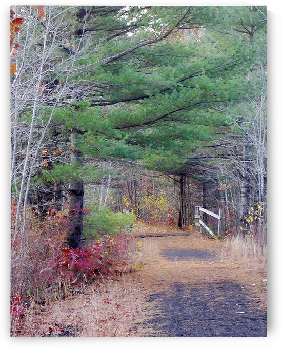 On The Rail Trail Rindge New Hampshire by FoxHollowArt