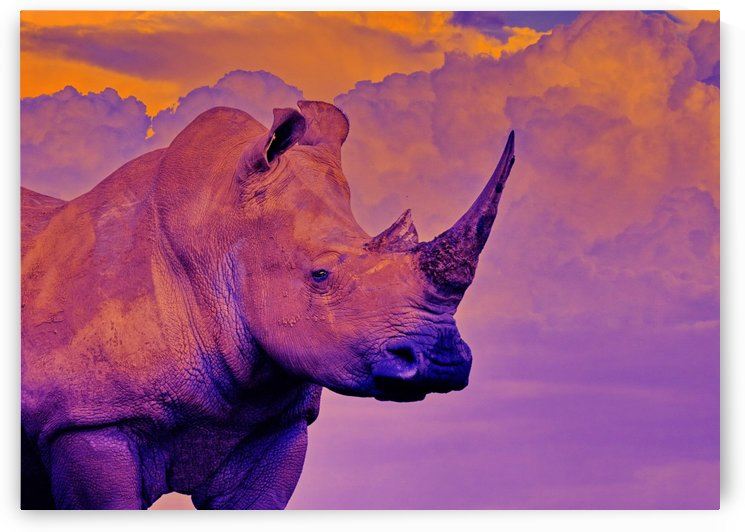 White Rhino orange purple by Thula-Photography