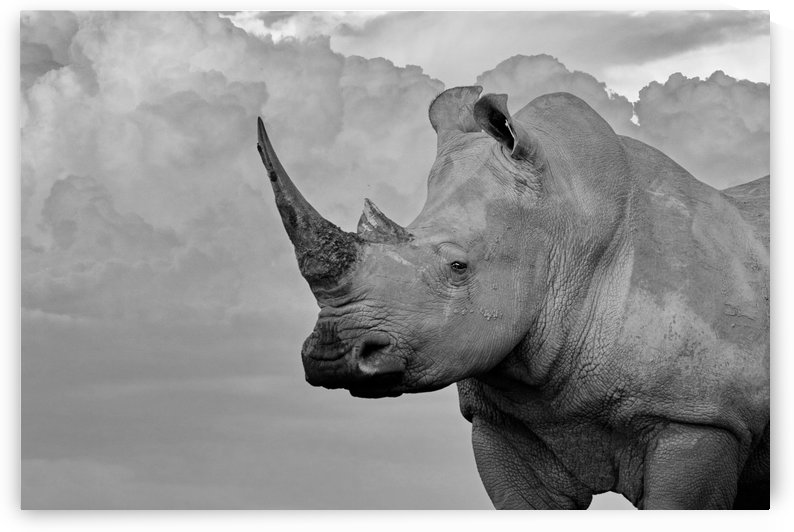 White Rhino with clouds b+w by Thula-Photography