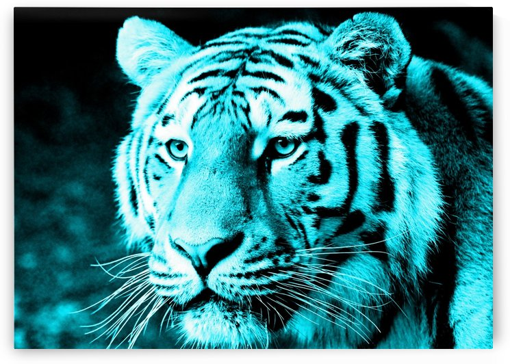 Tiger pop turquoise by Thula-Photography