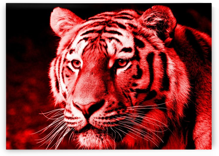 Tiger pop red by Thula-Photography