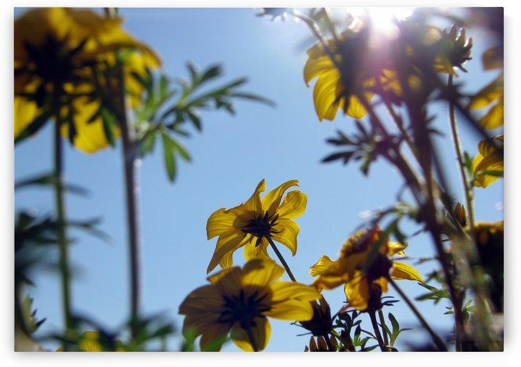 Summer Sky Flowers 7 by Jaeda DeWalt