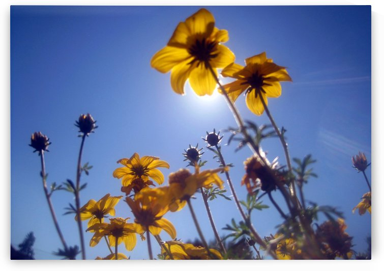 Summer Sky Flowers 2 by Jaeda DeWalt