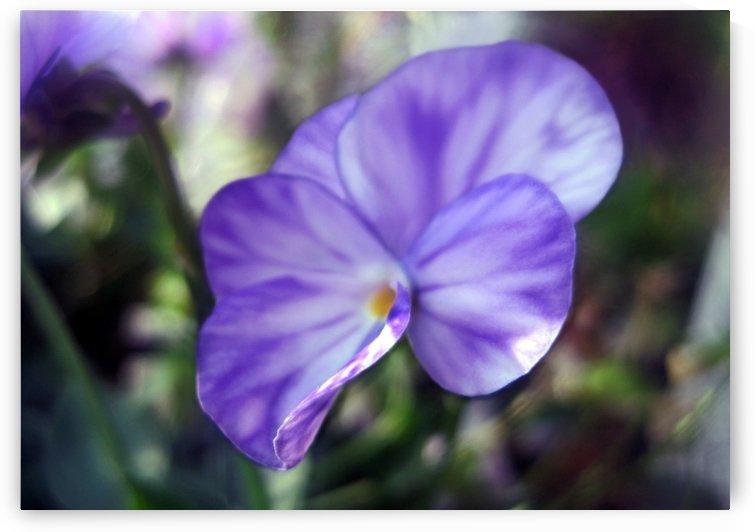 Lavender Beauty 1 by Jaeda DeWalt