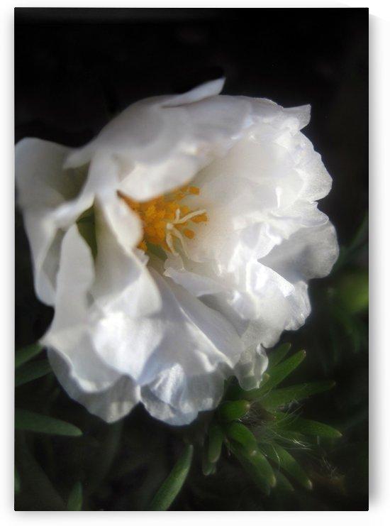 White Garden Flower 1 by Jaeda DeWalt
