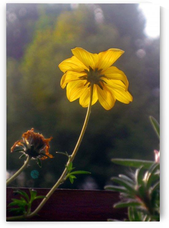 The Yellow Flower by Jaeda DeWalt