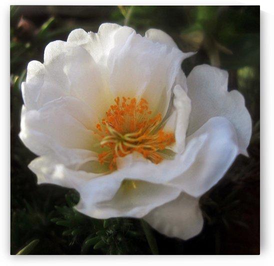White Summer Flower 1 by Jaeda DeWalt