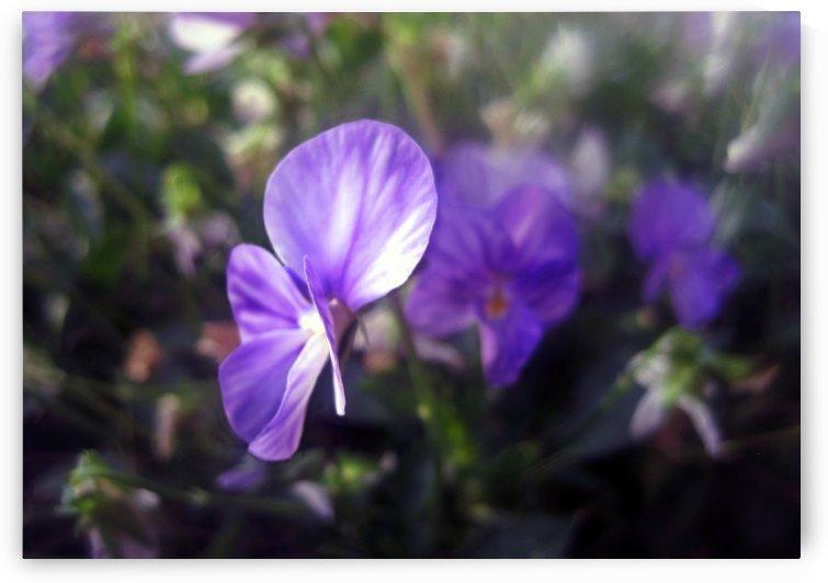 Lavender Beauty 2 by Jaeda DeWalt