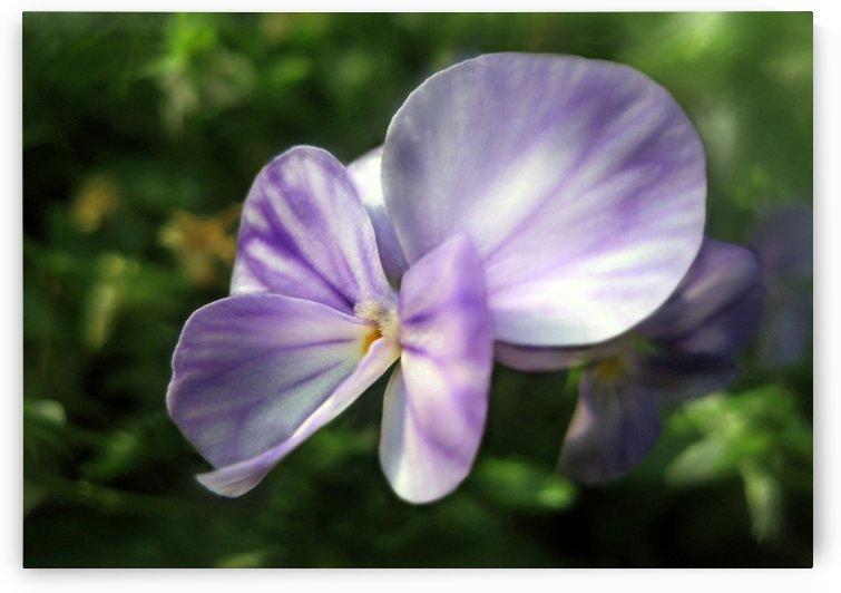 Lavender Beauty 3 by Jaeda DeWalt