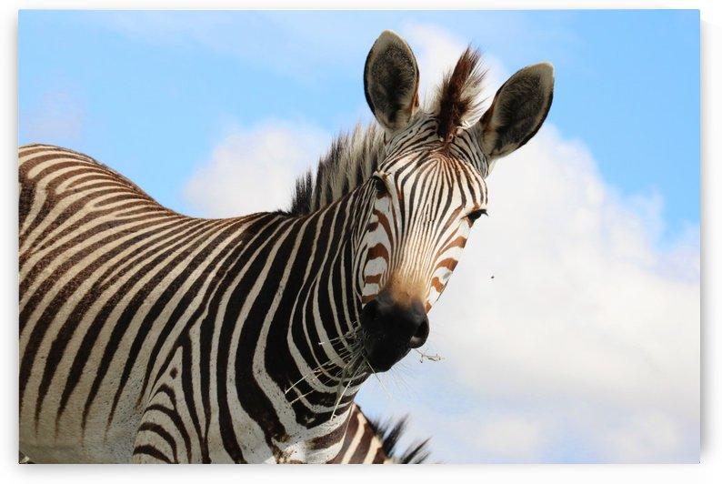 Zebra Portait 8745 by Thula-Photography