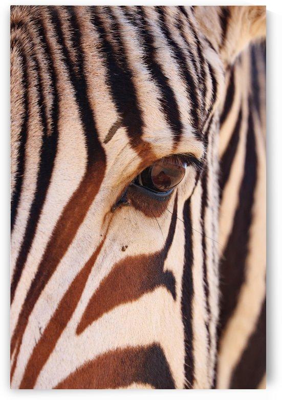 Zebra Eye 1873 by Thula-Photography
