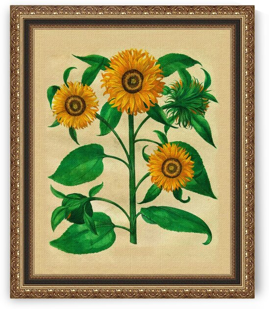 Sunflowers in frame by Radiy