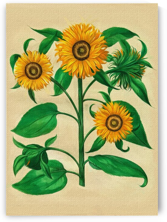 Sunflowers by Radiy Bohem