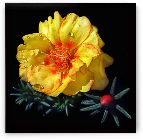 Dew Drop Flower by Jaeda DeWalt