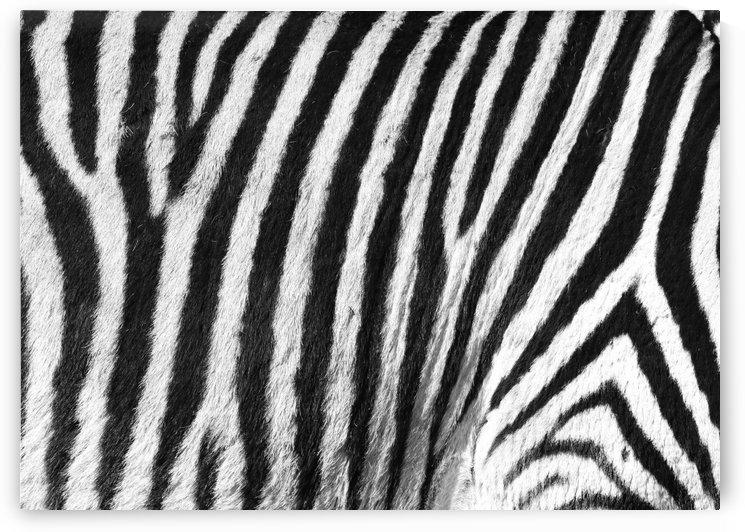 Zebra Pattern B 1534 by Thula-Photography