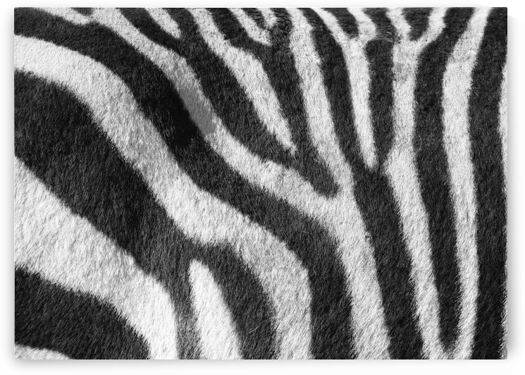 Zebra Pattern C 1552 by Thula-Photography