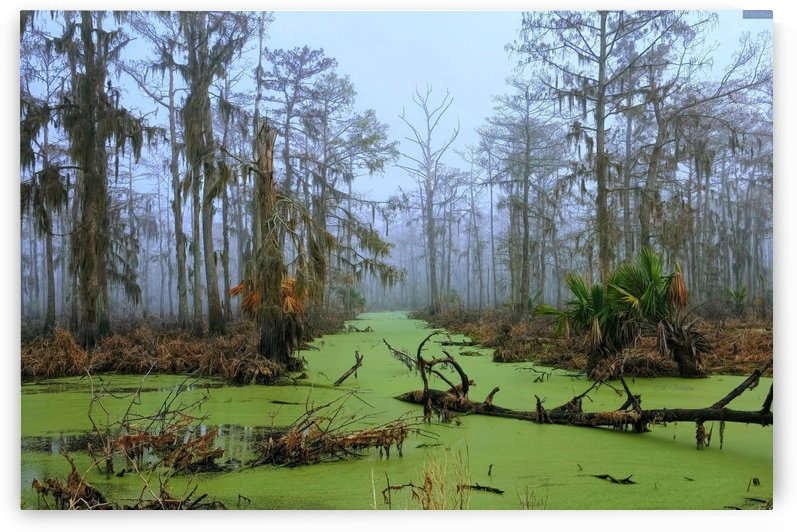Jurrasic Swamp - HDR by Digicam