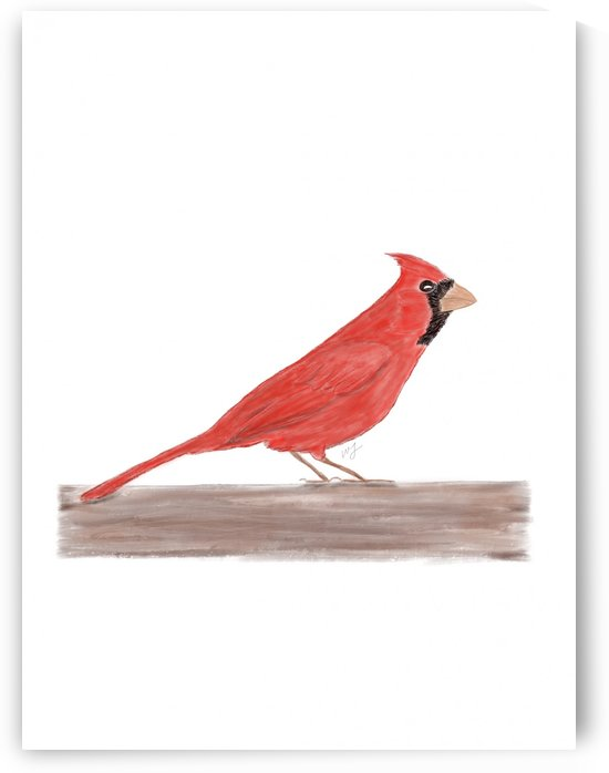 Cardinal by Brave Season Design