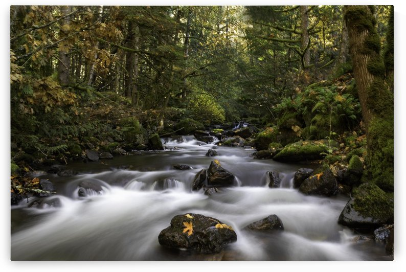 Creekside color by fredmeyer