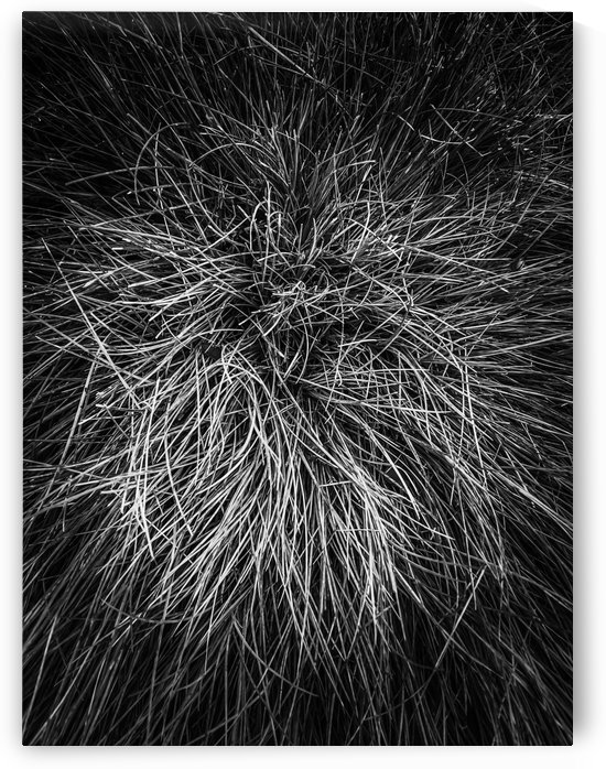 closeup grass texture in black and white by TimmyLA