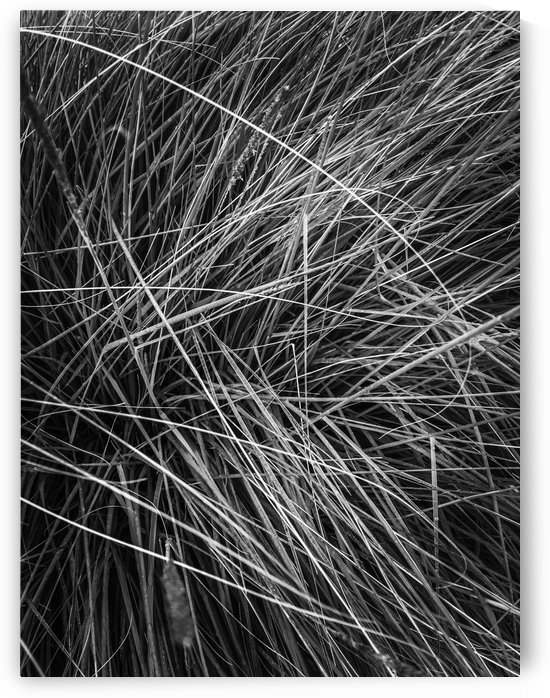 silky grass texture abstract in black and white by TimmyLA