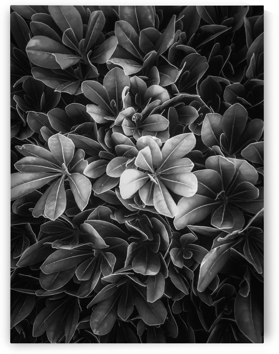 leaves texture background in black and white by TimmyLA
