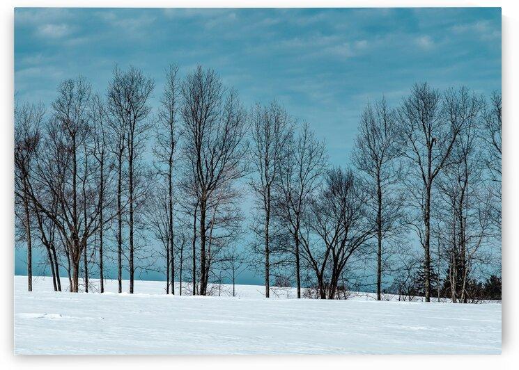 Hollis Treeline by Dave Therrien