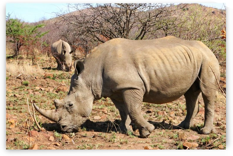 Rhinos 6403 by Thula-Photography