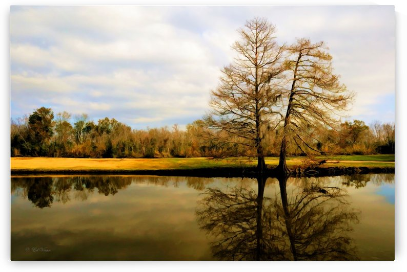Two Tree Pond by Digicam