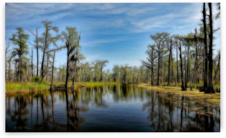 Louisiana Bayou - Painterly Surreal by Digicam