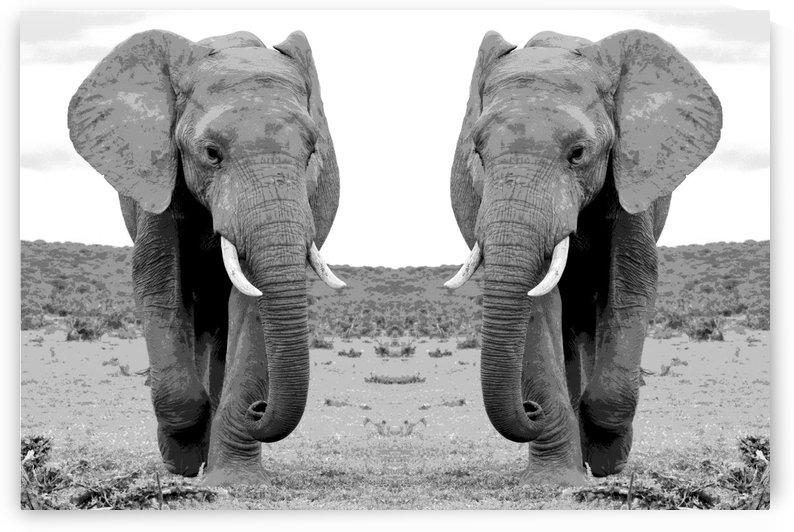 Elephant Twins - Art by Thula-Photography