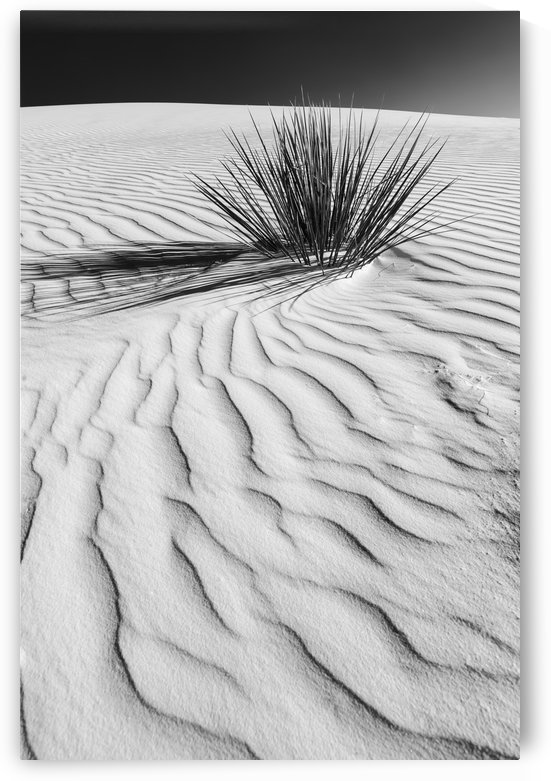 Wave pattern of dunes White Sands National Monument | Monochrome by Melanie Viola