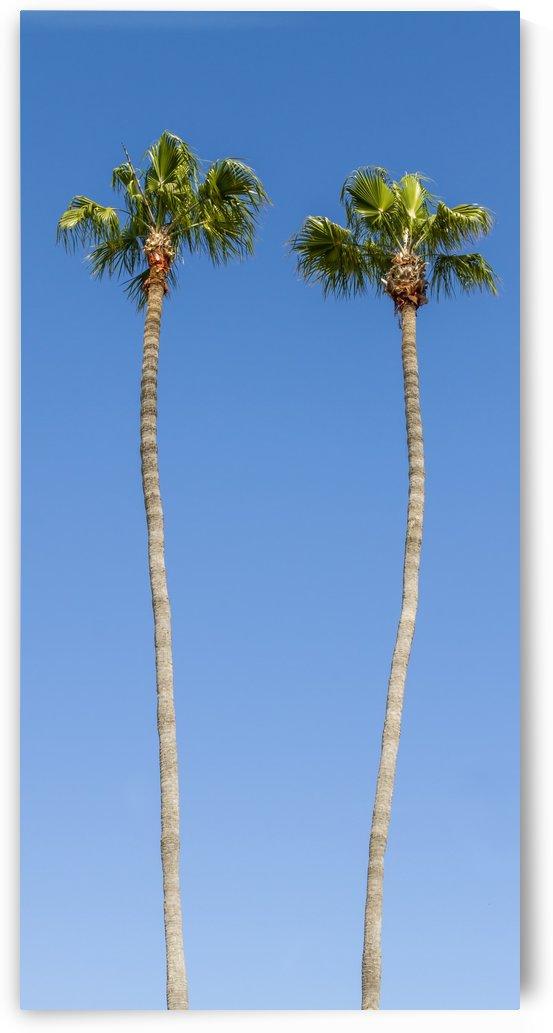 Idyllic Palm trees by Melanie Viola